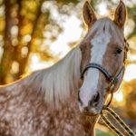 Louisville Equestrian Center