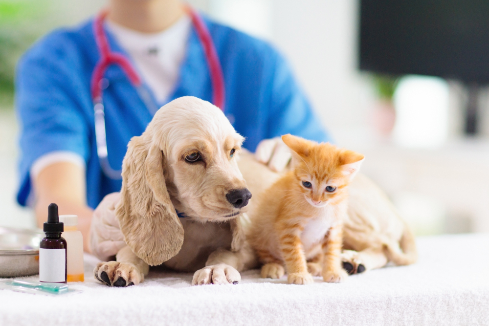 a dog and cat at the vet